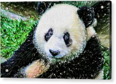 Acrylic Print featuring the painting Thinking Of David Panda by Lanjee Chee