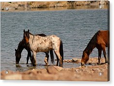 Thirsty Bachelors Acrylic Print by Amy Ernst