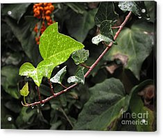 Acrylic Print featuring the photograph Thirsty by Ellen Cotton