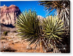 Thirsty In The Desert 1 Acrylic Print