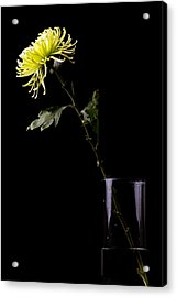 Acrylic Print featuring the photograph Thirsty by Sennie Pierson