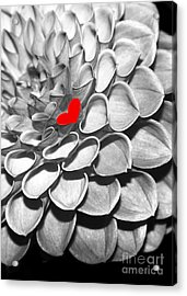 This Heart Is For You Acrylic Print by Sabrina L Ryan