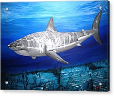 This Is A Shark Acrylic Print by Kevin F Heuman