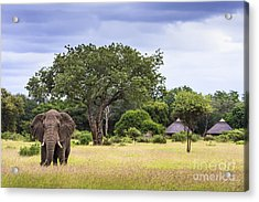 This Is Africa Acrylic Print