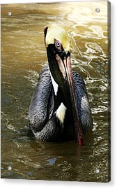 This Is My Best Side Acrylic Print