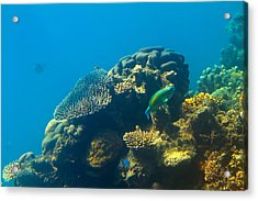 This Is Why They Call It The Great Barrier Reef Acrylic Print by Mr Bennett Kent