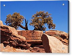 This Way Or That Acrylic Print by Bob and Nancy Kendrick