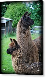 This Way Or That Acrylic Print by Kathy Sampson