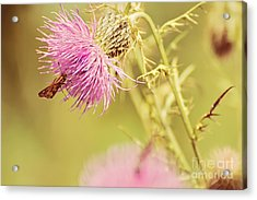 Thistle And Friend Acrylic Print by Lois Bryan