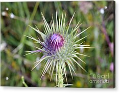 Acrylic Print featuring the photograph Thistle Flower by George Atsametakis
