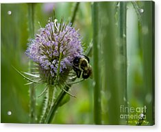 Thistle Forest Acrylic Print