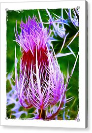 Acrylic Print featuring the photograph Thistle by Judi Bagwell