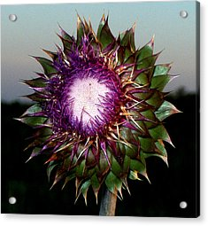 Thistle Night Acrylic Print