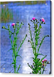 Thistle Acrylic Print by T Guy Spencer