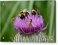 Acrylic Print featuring the photograph Thistle Wars by Scott Lyons