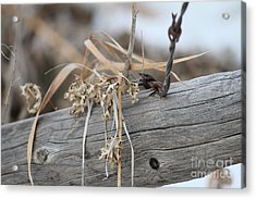 Acrylic Print featuring the photograph Thistles And Barbed Wire by Ann E Robson