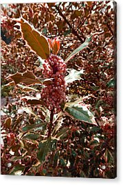 Acrylic Print featuring the photograph Thorn Berry by Laurie Tsemak