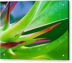 Thorn In Your Side Acrylic Print by Rebecca Flaig