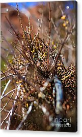Thorns On Fence Acrylic Print