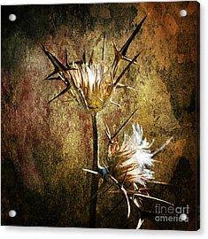 Thorns Acrylic Print by Stelios Kleanthous