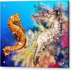 Thorny Seahorse Acrylic Print by Owen Bell