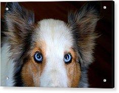 Those Eyes Acrylic Print by Kathryn Meyer