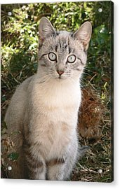 Those Eyes Acrylic Print by Laurel Powell