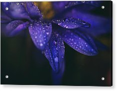 Those Tears You Cry Acrylic Print by Laurie Search