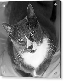 Devotion - Cat Eyes Acrylic Print