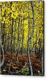 Acrylic Print featuring the photograph Through The Aspen Forest by Ellen Heaverlo
