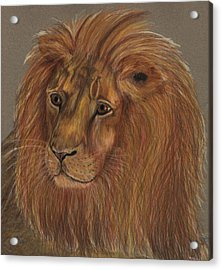 Acrylic Print featuring the drawing Thoughtful Lion 2 by Stephanie Grant