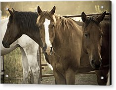 Acrylic Print featuring the photograph Three Amigos by Steven Bateson
