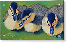 Three Amigos Acrylic Print by Tracy L Teeter