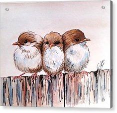 Three Baby Fairy Wrens Acrylic Print
