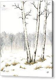 Three Birches In Late Winter Acrylic Print by Anna Bronwyn Foley