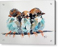 Three Birds Acrylic Print by Kovacs Anna Brigitta