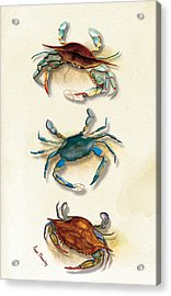 Three Blue Crabs Acrylic Print by Anne Beverley-Stamps