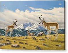 Three Bucks On The Ridge Acrylic Print by Paul Krapf