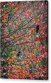 Three Crows In A Tree Acrylic Print by Ken Stanback