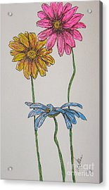 Three Daisies Acrylic Print