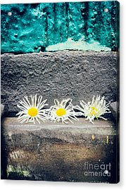 Acrylic Print featuring the photograph Three Daisies Stuck In A Door by Silvia Ganora