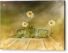 Three Daisies Acrylic Print by Veikko Suikkanen