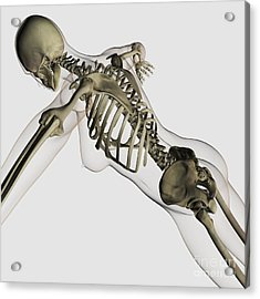Three Dimensional View Of Female Spine Acrylic Print by Stocktrek Images