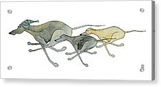 Three Dogs Illustration Acrylic Print by Richard Williamson