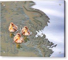Three Ducklings Swimming In Lake Acrylic Print by Juliak