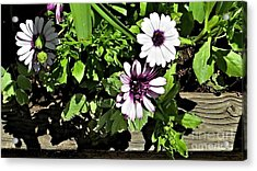 Three Flowers Acrylic Print by Claudette Bujold-Poirier