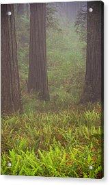 Three Foggy Muskeeters Acrylic Print