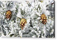 Three Frosty Cones Acrylic Print by Marilyn Hunt