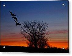 Three Geese At Sunset Acrylic Print by Raymond Salani III