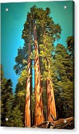 Three Giant Sequoias Digital Acrylic Print by Barbara Snyder
